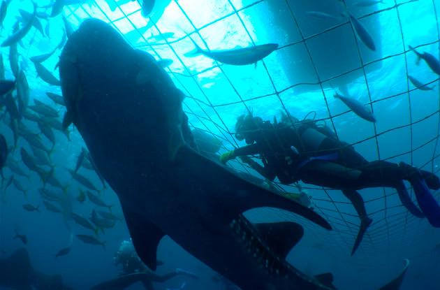 ジンベイザメ体験ダイビング 1