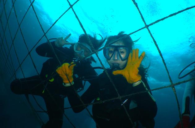 ジンベイザメ体験ダイビング 2