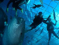 ジンベイザメ体験ダイビング イメージ