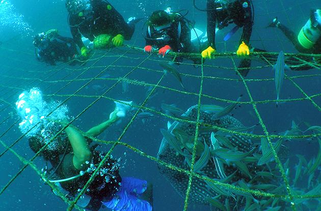 ジンベイザメ体験ダイビング 5