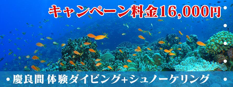 慶良間(ケラマ)体験ダイビング+シュノーケリング