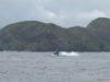 いいのもを見せていただきました。クジラに感謝の慶良間ファンダイビング