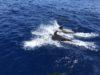 イルカ出現で興奮MAX慶良間体験ダイビング