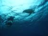 還暦祝いシュノーケリング&チービシ体験ダイビング
