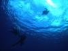 ご紹介からの慶良間体験ダイビング