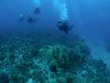 真冬のような海deチービシ体験ダイビング&ファンダイビング