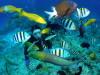 海況が安定している沖縄チービシ