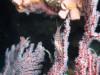 初めてのポイントはわくわくしますin平安座島ファンダイビング