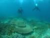 浦添、宜野湾でサンゴもりもり体験ダイビング