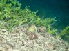 宜野湾ファンダイビングと海中泡盛