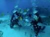 午後からチービシ体験ダイビング