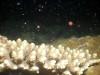 夜活3日目サンゴの産卵今期初観察
