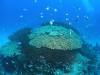 サンゴもりもり水納島でファンダイビング