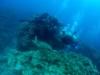 梅雨入りの沖縄でチービシ体験ダイビング
