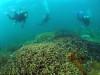 もりもりサンゴの宜野湾