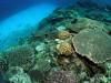 月に1回サンゴ保全活動でチービシへ