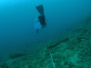 サンゴ保全活動からのAOWライセンス講習