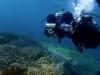 宜野湾、浦添ダブルヘッターでファンダイビング&体験ダイビング