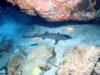 慶良間海域でクジラが見れています。那覇発慶良間ファンダイビングは2度お得!!