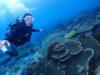 仕事を忘れてもりもりサンゴde体験ダイビング