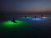 那覇より慶良間体験ダイビングとサンセット&ナイトSUPのダブルヘッター