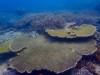 サンゴもりもり浦添、宜野湾で体験ダイビング