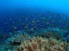 宜野湾のもりもりサンゴでファンダイビング