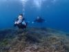 サンゴの絨毯を泳ぐ体験ダイビングin宜野湾、浦添