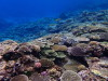 サンゴの保全活動