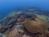 サンゴもりもり小物も楽しい宜野湾、浦添ファンダイビング