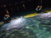 サンゴと小魚に癒されるサンセット&ナイトSUP
