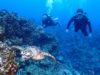 慶良間の海を満喫、体験ダイビング