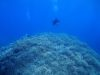 夏を感じる1日、もりもりサンゴの宜野湾、浦添ファンダイビング
