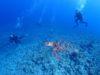 チービシ体験ダイビングと激流ナイトシュノーケリング