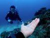宜野湾、浦添ファンダイビングはポイント調査を兼ねて