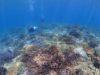 もりもりサンゴに癒されるダイビング