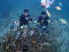 台風前、青の洞窟には行けず・・・白い砂、サンゴの海体験ダイビング