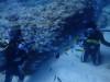 魚に囲まれるチービシ体験ダイビング