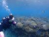 海は大荒れ、ダイビングショップは北部に集結deビーチ体験ダイビング