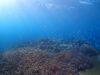 太陽さんさん浦添、宜野湾の海でファンダイビング