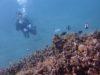久しぶりに21℃の海でPADIライセンス講習OWコース