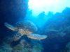 那覇発慶良間体験ダイビング予定は・・・チービシ体験ダイビングに・・・。