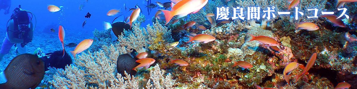 世界屈指の美しさ、沖縄 慶良間諸島でダイビング